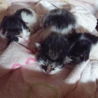 生まれたばかりの仔猫3匹