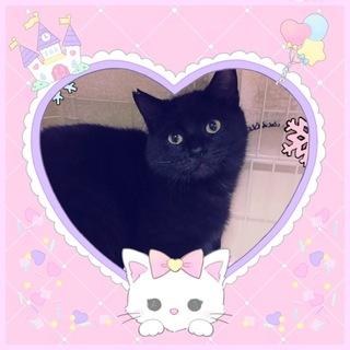 8ヶ月  元気な黒猫 クックー