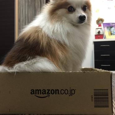Amazonのダンボールに入ってすました顔してるチャイ君(^◇^)