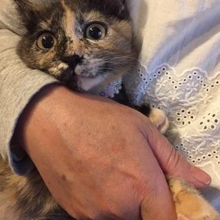 サビ猫フアンの方