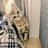 人好き!猫好き!シマシマ子猫さん(動画あり) サムネイル2