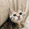 人好き!猫好き!シマシマ子猫さん(動画あり) サムネイル3