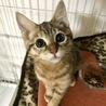 人好き!猫好き!シマシマ子猫さん(動画あり) サムネイル4