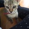 愛猫ちゃんの里親募集 サムネイル4