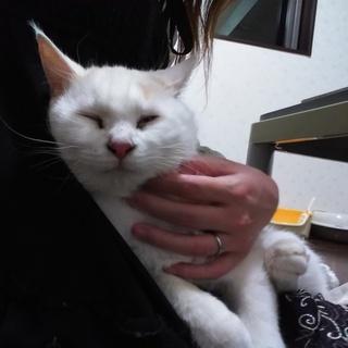 『募集一時停止』人間大好きなゴロスリ猫