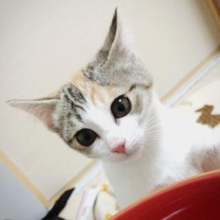 美猫 三毛 [応募者多数のため一時募集停止します]