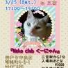 神戸三宮17~19時【猫の譲渡会 in くーにゃん】