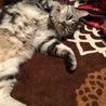 気性が激しい猫
