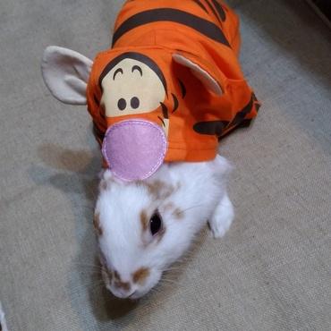 友人からラッキーのために服をいただきました。うさぎが虎に変身( ´艸`)