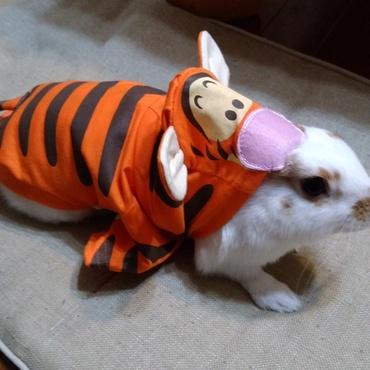 虎の姿、その2( ´艸`)