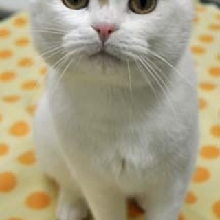 おっとり穏やかな成猫です。
