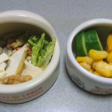 今日(3/25)の食事 ペレット、パリパリ野菜、乾ブロッコリー、乾りんご、いりこ、豆腐、生クルミ、きゅうり、カボチャ、コーン