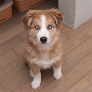 約5ヶ月のブルーアイの元気男子!