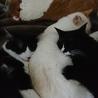 はなまるはクック・と麦の抱き枕。人気者〜!(*´∇`)