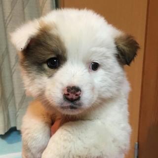 ふわふわの可愛い子犬ちゃん