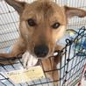 歩くたび垂れ耳パタパタ☆笑う犬・大吉君 サムネイル3