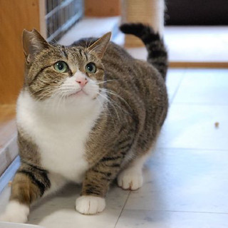 美猫、お姫様気質の3歳の女の子です!