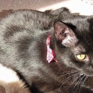 おっとりマイペースのかわいい黒猫