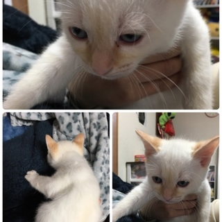 子猫 生後2ヶ月少し