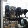フレンドリーなメタボ犬、クマ吉 サムネイル4