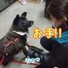 フレンドリーなメタボ犬、クマ吉 サムネイル6