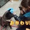 フレンドリーなメタボ犬、クマ吉 サムネイル7