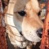 とてもお利口でコミュニケーションが上手な犬です。  サムネイル2