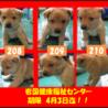 子犬3兄弟が山口県のセンターで待っています!!