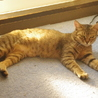 熊本地震の被災猫。たくさんの猫が助けを待っています サムネイル4