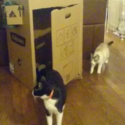 大きな箱は人気物☆