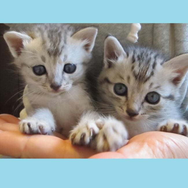 島猫のタマのカバー写真