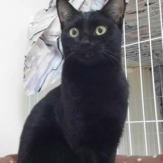 艶々黒猫 美少女 ♥真凜ちゃん♥ 12ヶ月