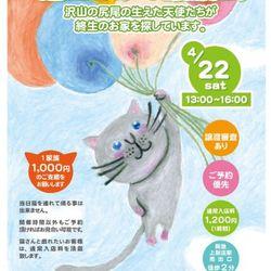 第6回 シェルター型保護猫カフェくすめっと譲渡会 サムネイル1