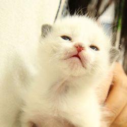第6回 シェルター型保護猫カフェくすめっと譲渡会 サムネイル2