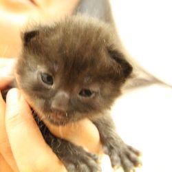 第6回 シェルター型保護猫カフェくすめっと譲渡会 サムネイル3