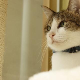 保護猫カフェ「アリア」