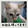 迷子ちゃん!?とても可愛いまだ小さな猫ちゃんです