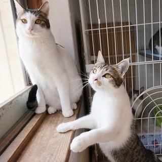 沢山の猫達がお迎えを待っております