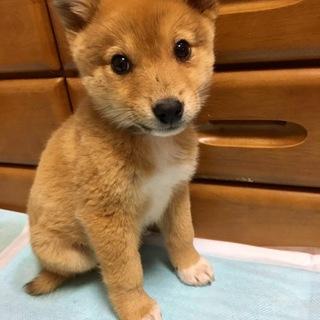 可愛いい仔犬ちゃん!2か月