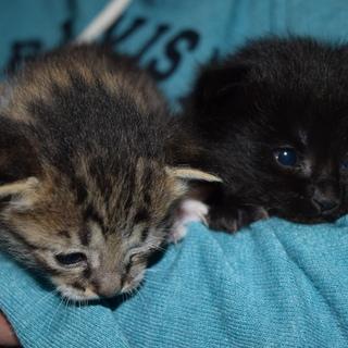 子猫2匹里親募集
