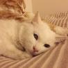 ふくふくおもちみたいなオッドアイの美人白猫さん♡ サムネイル2