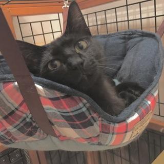 10ヶ月黒猫・甘えん坊