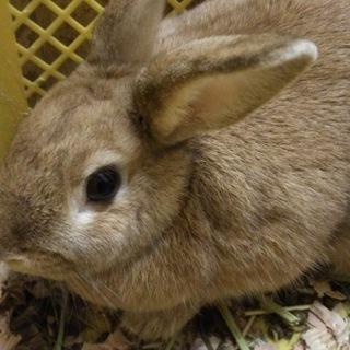 保護ウサギの子どもたち(続き)
