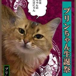 ブログ更新:2月末の愛猫プリンちゃんのお誕生日会