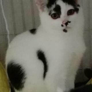 アイライン白黒♂約7ヶ月