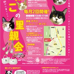 猫の譲渡会@原宿