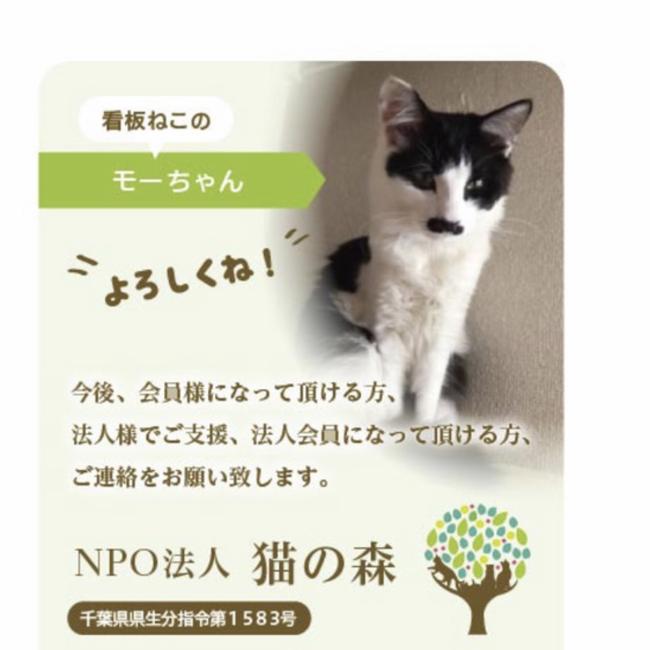 NPO法人 猫の森のカバー写真