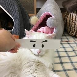 ネコ診断 サムネイル1