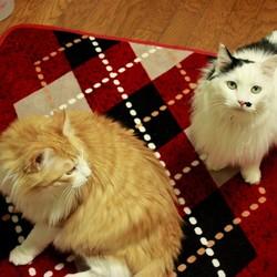 ネコ診断 サムネイル2