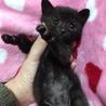 1ケ月半☆可愛い黒猫 麦ちゃん サムネイル2